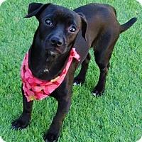Adopt A Pet :: Brody - Irvine, CA
