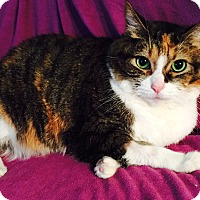 Adopt A Pet :: Bassie Lou - Addison, IL