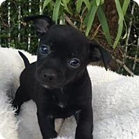 Adopt A Pet :: Jackie - Loxahatchee, FL