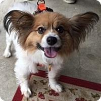 Adopt A Pet :: Shiloh - Beavercreek, OH