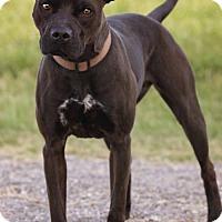 Adopt A Pet :: Scooch - Pryor, OK