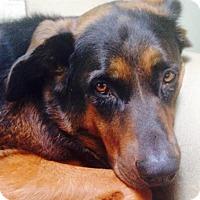 Adopt A Pet :: DeeDee - Lexington, KY