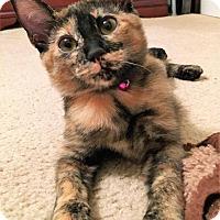 Adopt A Pet :: Esme - Greensboro, GA