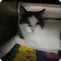 Adopt A Pet :: Castle - Wyandotte, MI