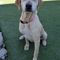 Adopt A Pet :: Bonny - Towson, MD