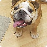 Adopt A Pet :: Augustine Edward - Deltona, FL