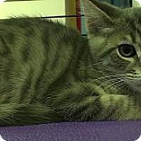 Adopt A Pet :: Viggo Mortensen - Richboro, PA