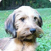 Adopt A Pet :: Chevy - Mocksville, NC