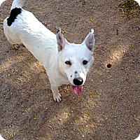 Adopt A Pet :: Quincy - Phoenix, AZ
