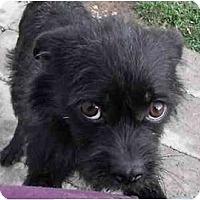 Adopt A Pet :: Tiger - Meridian, ID