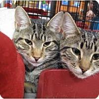 Adopt A Pet :: Twizzle - Port Republic, MD