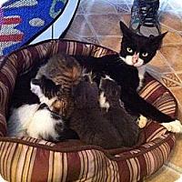 Adopt A Pet :: Nympadora - Tarboro, NC