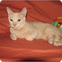 Adopt A Pet :: DJ - Norwich, NY
