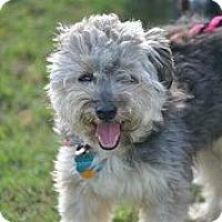 Adopt A Pet :: Beckham - Austin, TX
