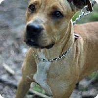 Adopt A Pet :: Cinnimo - Tinton Falls, NJ