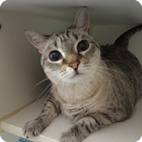 Adopt A Pet :: *SUGAR - Winder, GA