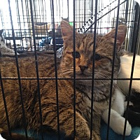 Adopt A Pet :: Silver - Orillia, ON