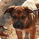 Adopt A Pet :: Honey