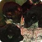 Adopt A Pet :: Annie's Pup 5