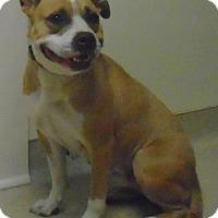 Adopt A Pet :: Tanya - Gary, IN