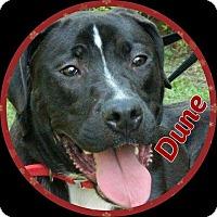 Adopt A Pet :: Dune - Newnan, GA