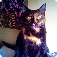 Adopt A Pet :: Jive - Novato, CA