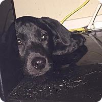 Adopt A Pet :: Tabitha - Destrehan, LA