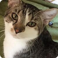 Adopt A Pet :: Rocky - Acushnet, MA