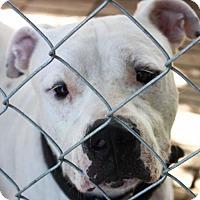 Adopt A Pet :: Buster - Cleveland, TX