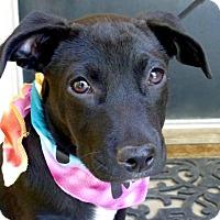 Adopt A Pet :: Rainbow - Baton Rouge, LA