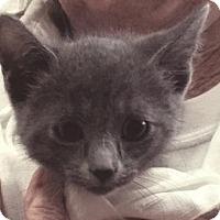Adopt A Pet :: Sarah - Fresno, CA