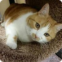 Adopt A Pet :: Mia - Encinitas, CA