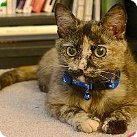 Adopt A Pet :: Clover - Durham, NC