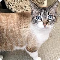 Adopt A Pet :: Cassandra - Menifee, CA