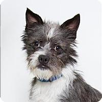 Adopt A Pet :: Scooter - San Luis Obispo, CA