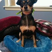 Adopt A Pet :: Ina in CT - Manchester, CT