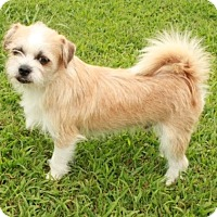 Adopt A Pet :: Wheaton - Norfolk, VA