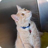 Adopt A Pet :: Hutch - Sierra Vista, AZ
