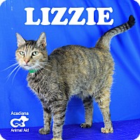 Adopt A Pet :: Lizzie - Carencro, LA