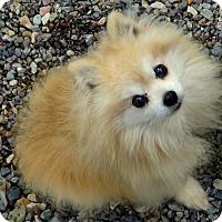 Adopt A Pet :: Moses - Libby, MT