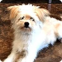 Adopt A Pet :: Joey - Boulder, CO