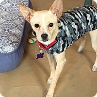 Adopt A Pet :: Tanner - Hopkinton, MA