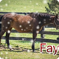 Thoroughbred Mix for adoption in Nicholasville, Kentucky - Holiday Special - Faye for $50