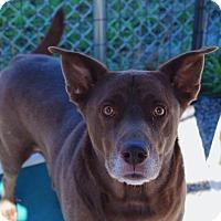 Adopt A Pet :: Jeter - Barco, NC