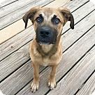 Adopt A Pet :: Big Joe