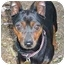 Photo 3 - Miniature Pinscher Dog for adoption in Florissant, Missouri - Addie