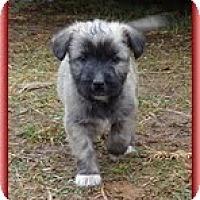 Adopt A Pet :: Little Lola - Brattleboro, VT