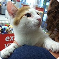 Adopt A Pet :: Sherbert - Riverhead, NY