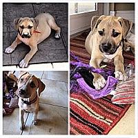 Adopt A Pet :: PUPPIES!! - Brooksville, FL