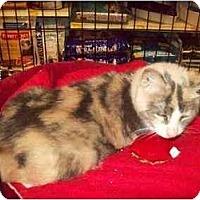 Adopt A Pet :: Portia Bella - Orlando, FL